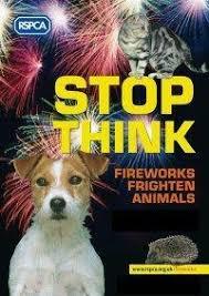 animals fireworks